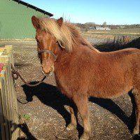Terapi Med Heste Og Andre Dyr