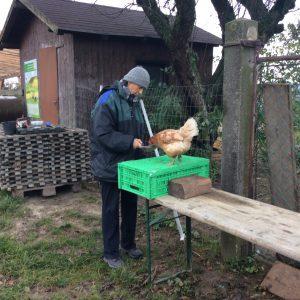Eva øver klikker træning med høne.