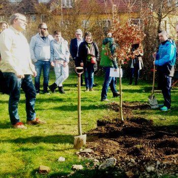 Træplantning3