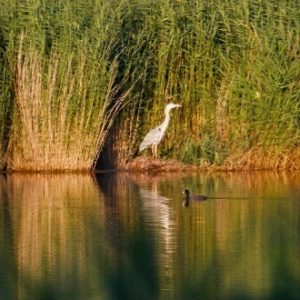 Oplev Sorø Fra Natursiden, Lige Når Efteråret Bringer Alle De Smukkeste Nuancer Spil.